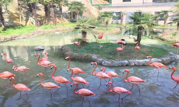 Feizhou Zoo