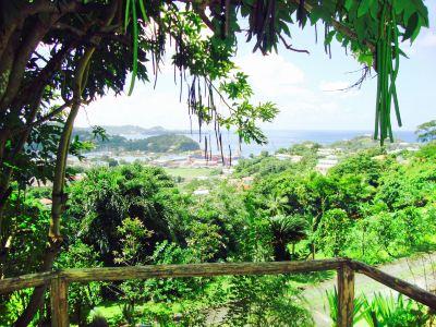Hyde Park Tropical Garden