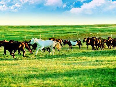 Ordos Grasslands Tourist Area