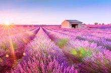 七月的南法,带你去看那一片紫色薰衣草花海,等待爱情!