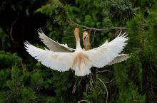 洪泽湖湿地观鸟园游记