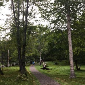 登别原始林旅游景点攻略图