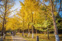 全球12个油画般的银杏赏秋胜地