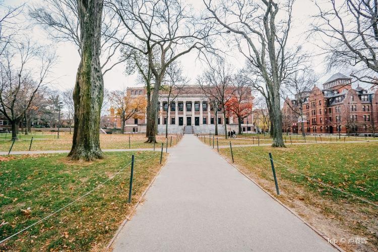 哈佛大學3