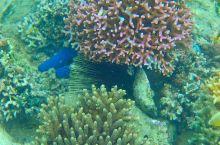 马洛洛莱莱岛码头附近浮潜