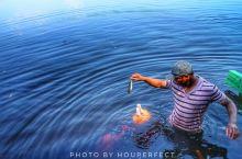 亚马逊河流的动物奇遇世界