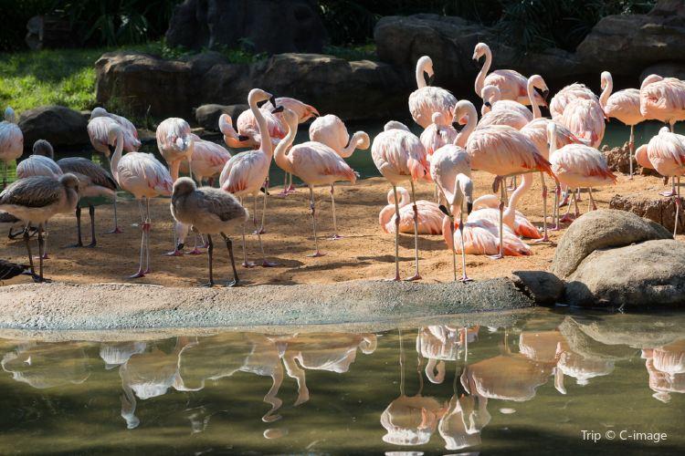 休士頓動物園2