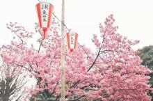 三月来这些圣地,才能不负大好春光