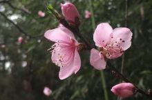 万州拍的花花草草