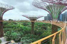新加坡滨海湾花园:惊艳智慧树 滨海湾花园,又称智慧树,两棵树之间的高空栈道距地面十几层楼高,无比惊艳