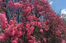 春日,暖阳,花红