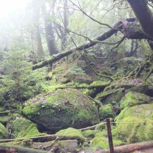 白谷云水峡旅游景点攻略图