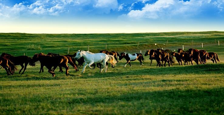 鄂尔多斯大草原旅游景点图片