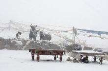 单车自驾川藏线之米拉山口遇大雪