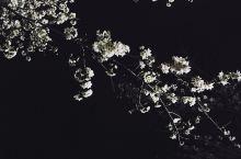 樱季节赏花之🌸夜的水源公园🌸