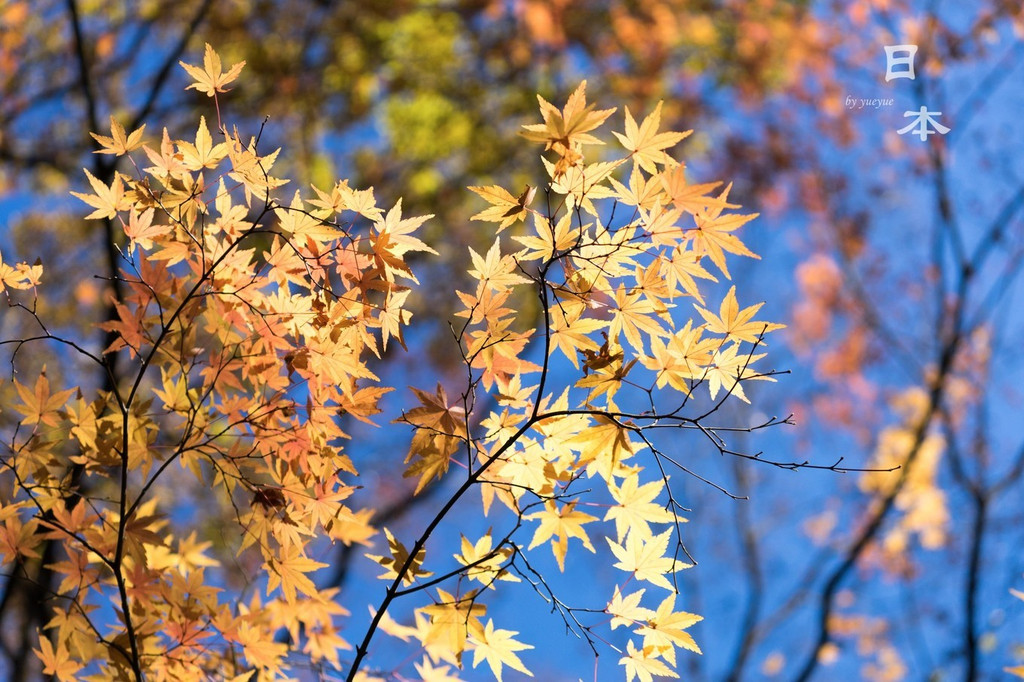 一个人的赏枫雕塑之旅,遇见最美的秋