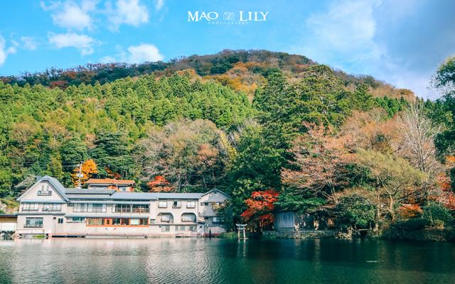 九州大分,日本温泉乡的别样玩法(别府、由步院、高崎山)