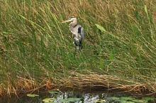 大沼泽国家公园