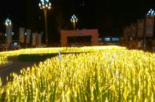 德阳市麦穗灯展