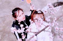 桃花节 四月天