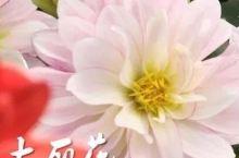 Top5|最美人间四月天,看花吃花!