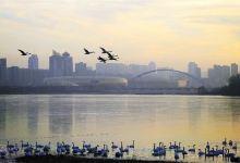 天鹅湖国家城市湿地公园+陕州地坑院+宝轮寺塔一日游