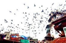 加德的屋顶,各式的、圆的、尖的,时常有鸽子在盘旋