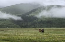 自由奔驰在美丽的草原
