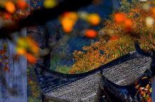 家门口这片特级秋景即将冲上颜值巅峰,住+玩都帮你规划好了!