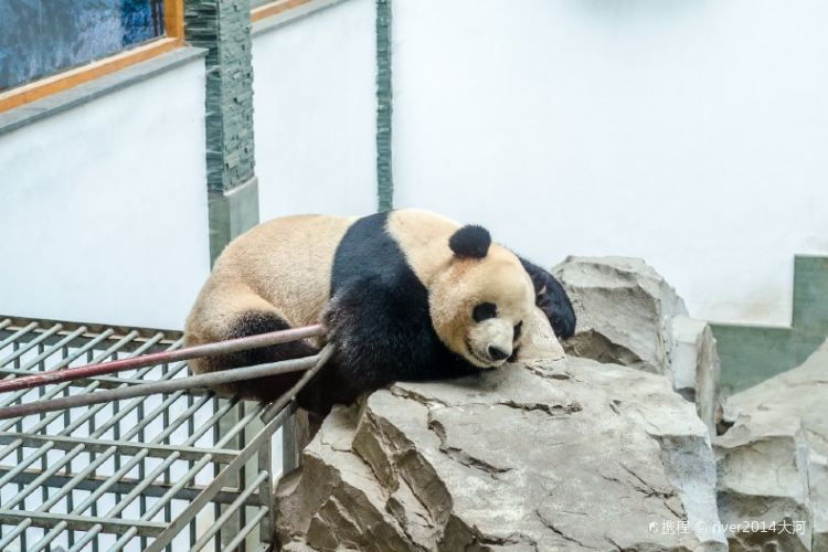 Panda Pavilion 2