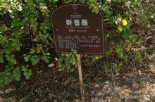 莱山植物园