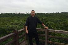 海南红树林—-热带温暖气候的园林