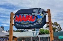 偶遇萌萌哒--maru动物园