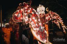 直击现场,斯里兰卡最盛大的佛牙节
