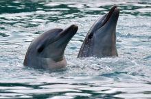 黄金海岸海豚表演