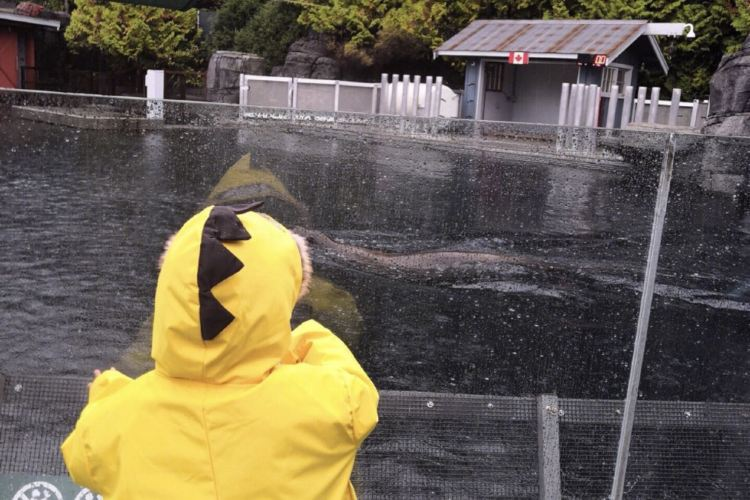 Vancouver Aquarium3