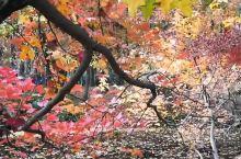 天平山赏枫,枫景迷人