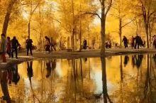 最美秋天|额济纳旗胡杨林满足你对秋的幻想!