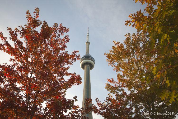 CN Tower3