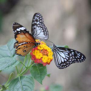 Jumalon蝴蝶保护区旅游景点攻略图