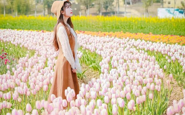 莫负春光,在杭州湾享海上风情,诉花田浪漫