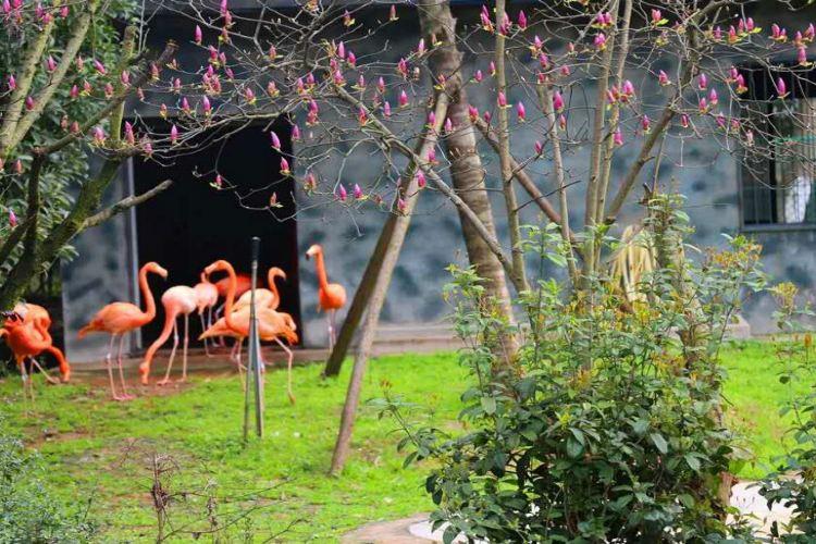 창사 생태 동물원1