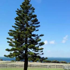 丘吉尔岛传统农场旅游景点攻略图