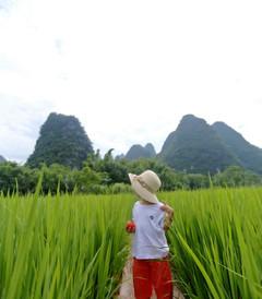 [阳朔游记图片] 暑假亲子游,带着孩子体验桂林阳朔阅山阅水阅生活的慢旅行