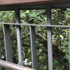 大安森林公园旅游景点攻略图