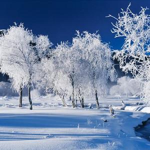 喀纳斯游记图文-冬季游新疆,我建议你这样玩,够嗨够有趣|干货攻略集