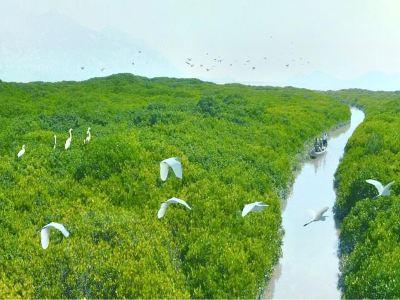 Zhuta Mangrove Nature Reserve