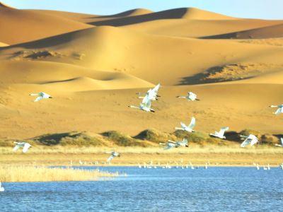 Tengger Desert Swan Lake