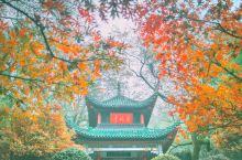 长沙赏枫胜地又到金秋好时节,登高观景领略岳麓人文!