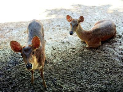 Langkawi Wildlife Park